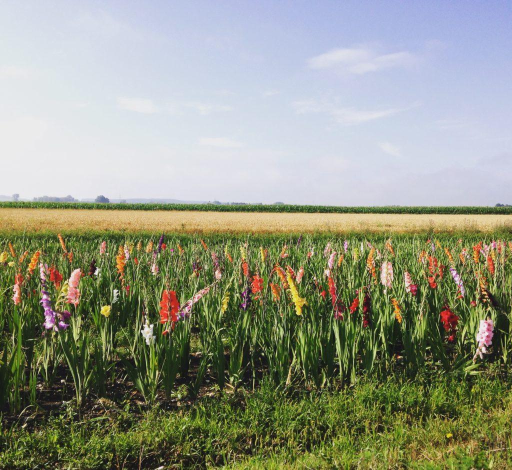 Im Sommer überall zu finden (zumindest in ländlichen Regionen): Blumen zum Selberschneiden
