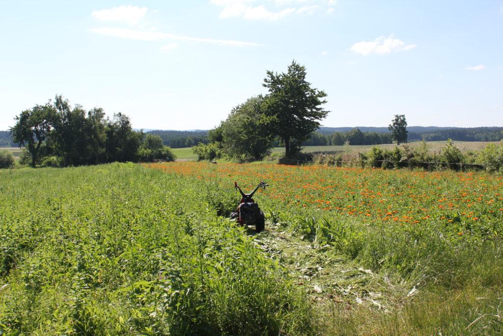 Zu Gast bei den SONNENTOR-Ursprungsbauern, Familie Kainz