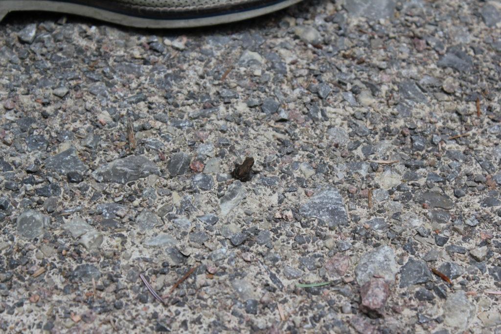 Kann man den winzigen Frosch sehen?