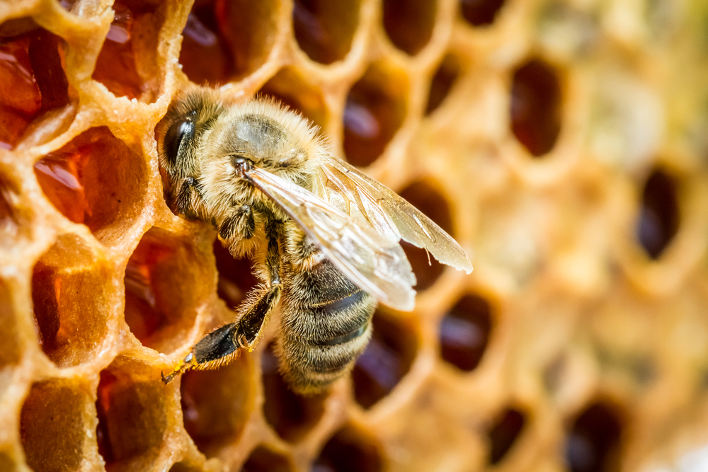 Gastbeitrag: Dürfen Veganer eigentlich Honig essen?