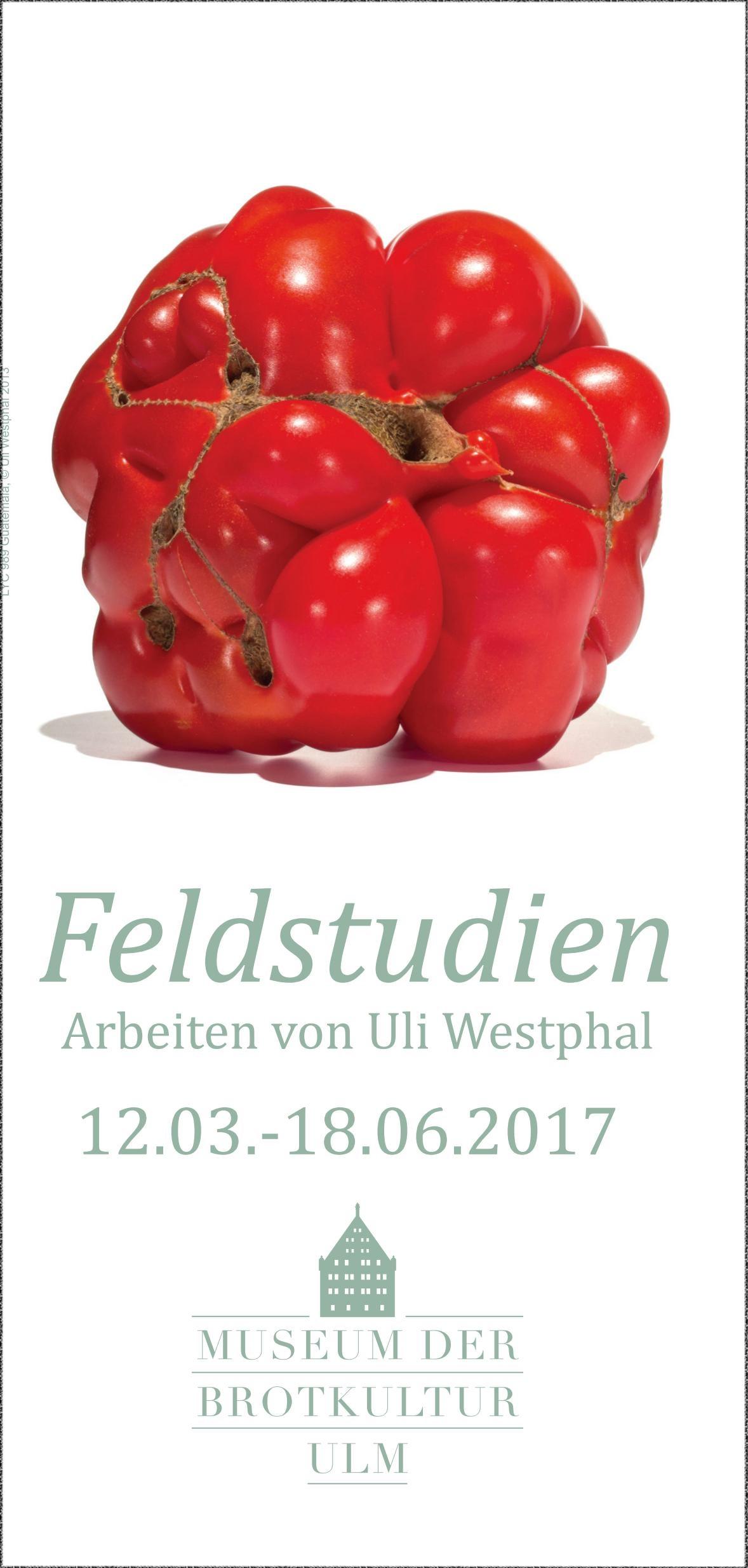 """""""Feldstudien"""" von Uli Westphal – Ausstellung im Museum für Brotkultur in Ulm"""