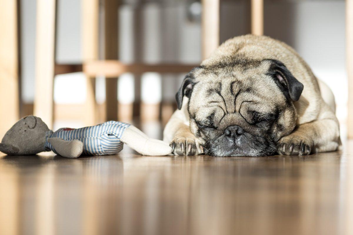 Ausreichend Schlaf trotz Baby – Mit diesen Tipps kommst du stressfrei durch den Tag