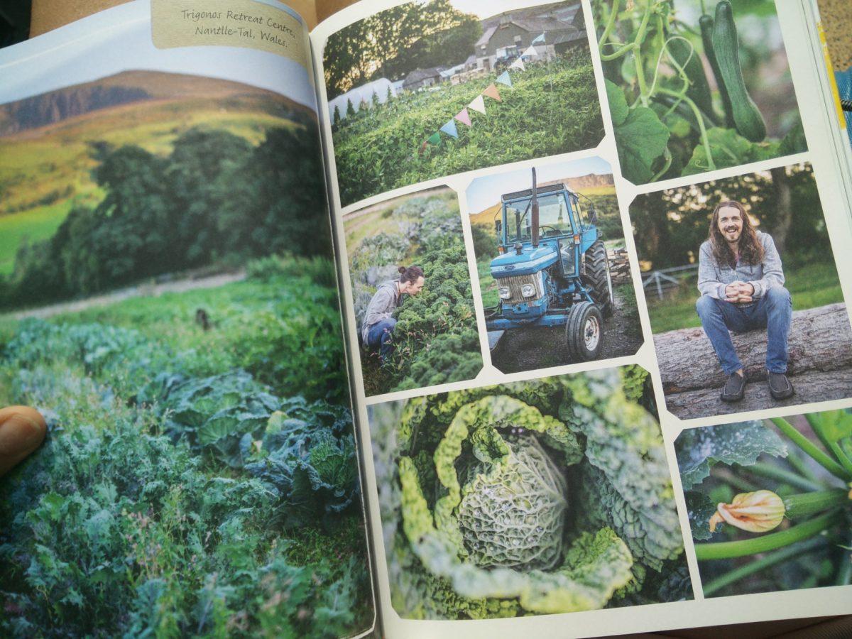 """Das perfekte vegane Küchenbuch: """"Food & Harmony""""  inklusive Gewinnspiel"""