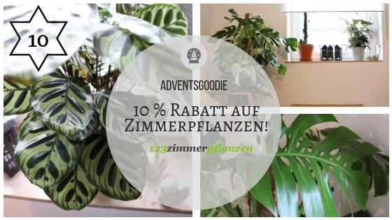 123Zimmerpflanzen – Meine neuen Lieblinge sind eingezogen (mit Goodie!)