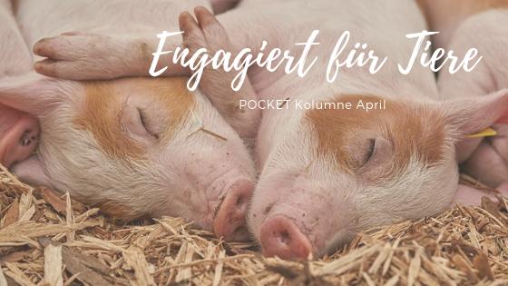 POCKET Kolumne April: Engagiert für Tiere in der Region Ulm
