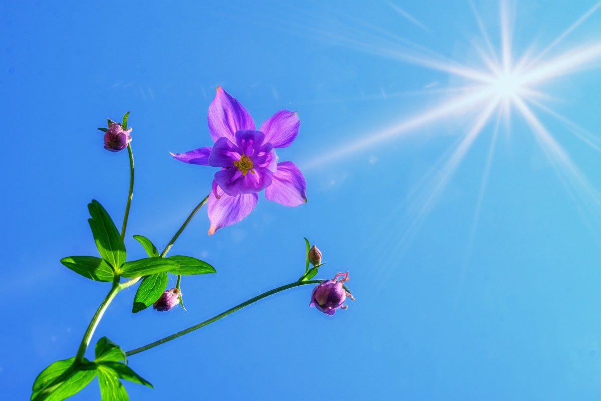 Sonnencreme natürlich & bio – Geht das?